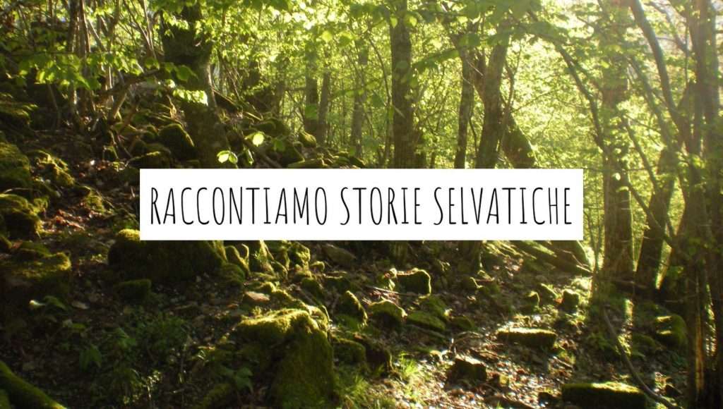 Radure-storytelling selvatico