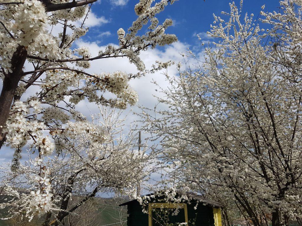 Primavera cambio climatico